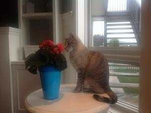 Even my cat appreciates the garden!