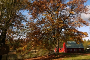 Autumn leaves and a little red barn - perfect!