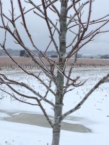 The winter wonderland around my home!